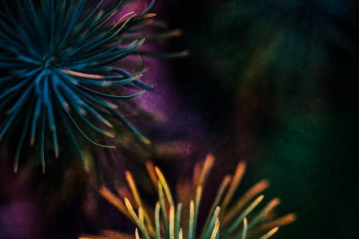 Makrofotografie eines Tannenbaumes